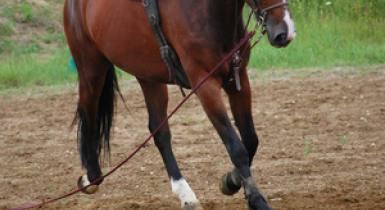 Equestre 16